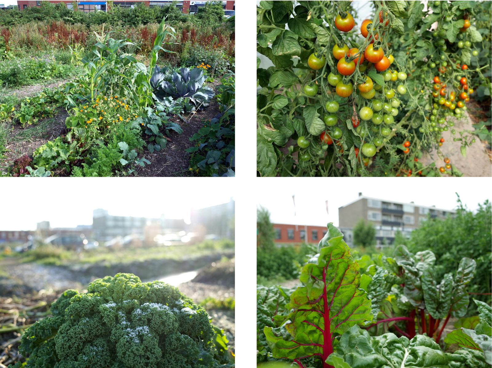 w_185_4_fotos_a_groente